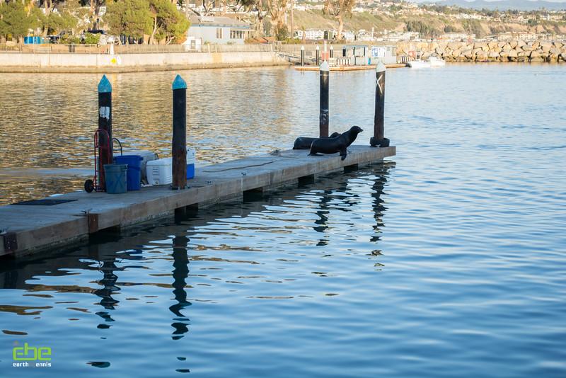 Dana Point Harbor, Dana Point, CA 2.14.15