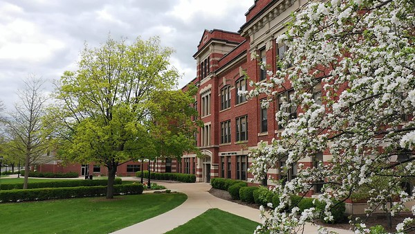 2020 UWL Spring Graff Main Hall Tulips Flowers 4
