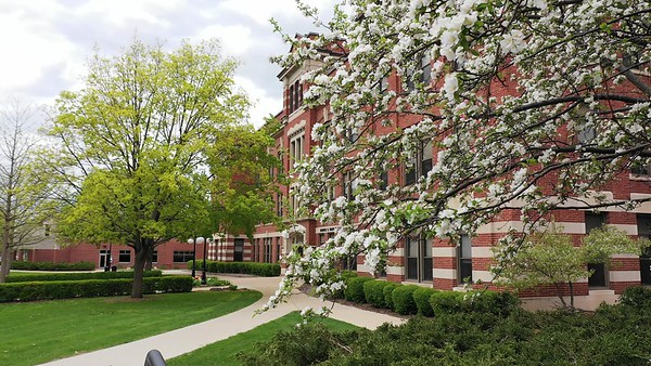 2020 UWL Spring Graff Main Hall Tulips Flowers 3