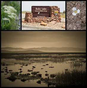 Ruby Lake National Wildlife Refuge