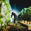 Dauo Harvest_012