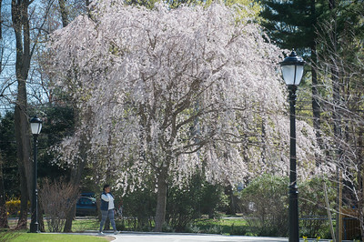 Spring time At Westfield State University