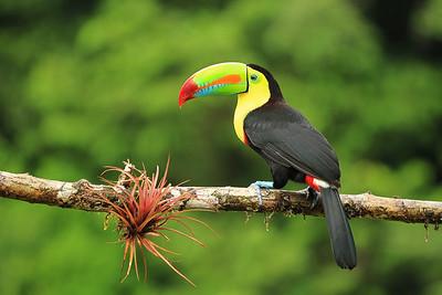 Costa Rica - General