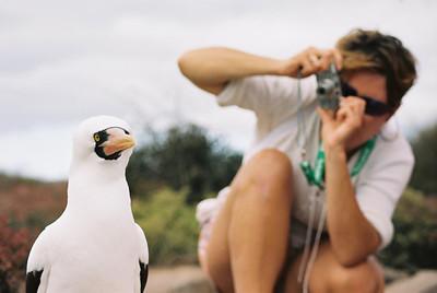 Galapagos - Eric, Letty, Flamingo