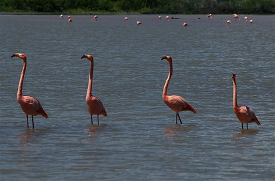 18GPS_FLAMINGOS_hi-res.jpg