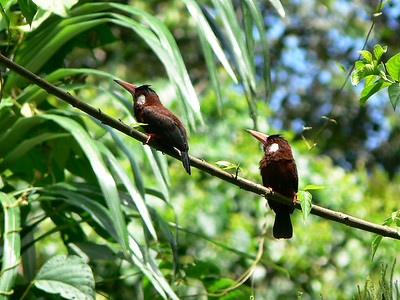 wildlife-la-selva-05.jpg