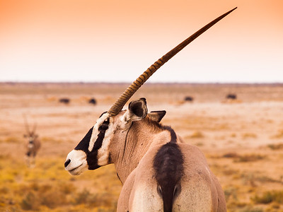 Namibia Unbound