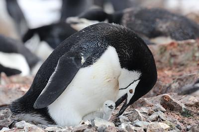 Polar Latitudes - Antarctica