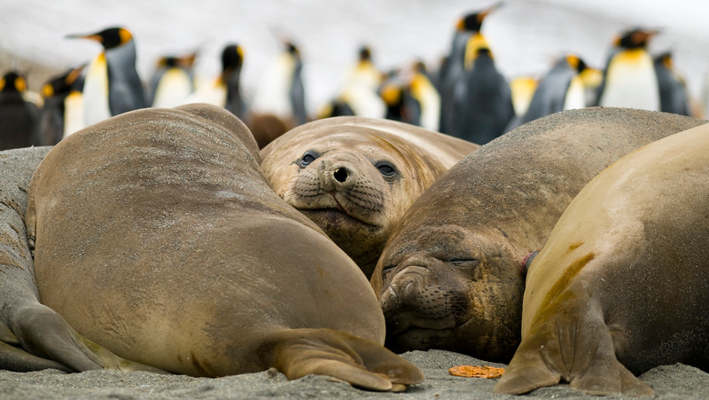 Elephant Seals Taking a Break