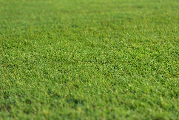 Virginia Green Lawn Care - High Resolution