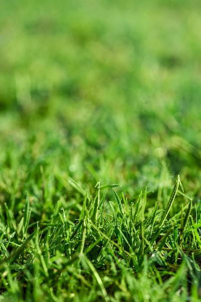Virginia Green Lawn Care - Web Size