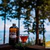Whalebird in Tahoe_007
