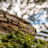 Wild Bloom ~ Spring '19 Landscape_015