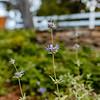 Wild Bloom ~ Spring '19 Landscape_012