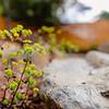 Wild Bloom ~ Spring '19 Landscape_005