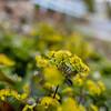 Wild Bloom ~ Spring '19 Landscape_016