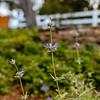 Wild Bloom ~ Spring '19 Landscape_011