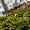 Wild Bloom ~ Spring '19 Landscape_014