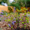 Wild Bloom ~ Spring '19 Landscape_003