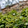 Wild Bloom ~ Spring '19 Landscape_013