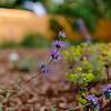 Wild Bloom ~ Spring '19 Landscape_004
