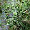 Wild Bloom_016