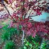 Wild Bloom_015