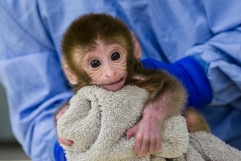 Baby Monkey Mac