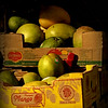 Premium Mango - Fruit in Late-Day Sun
