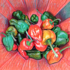 A Passle Of Peppers