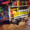 Bodega Cat - At Home in New York