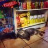 Bodega Cat - At Home in New York