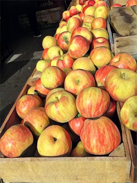 Autumn Bounty - Apples