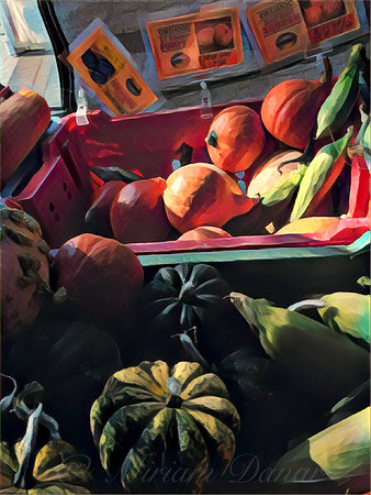 The Squash Bin - After the Harvest