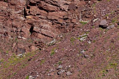 Deer crossing Willow Pass