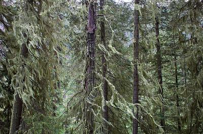 Snowmass Creek Trail