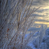 Frozen trees along the lakeshore