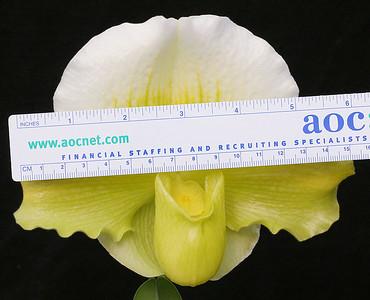 Alchemists Jewel GreenGlacier scale NS