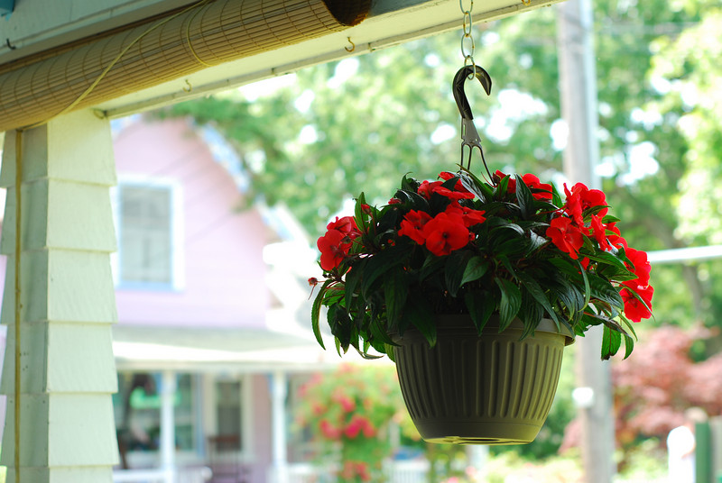Pot of hanging flowers
