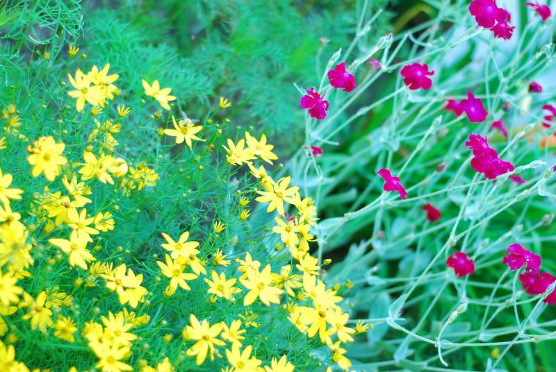 Flowers in Nonni's garden