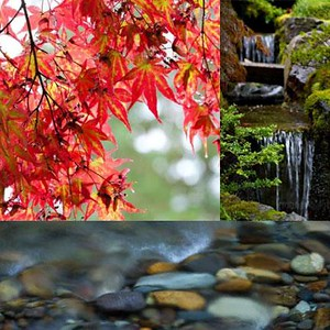 PO#665, Japanese-Garden-2, 30x30