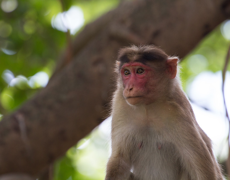 Natural Sunburn. India.
