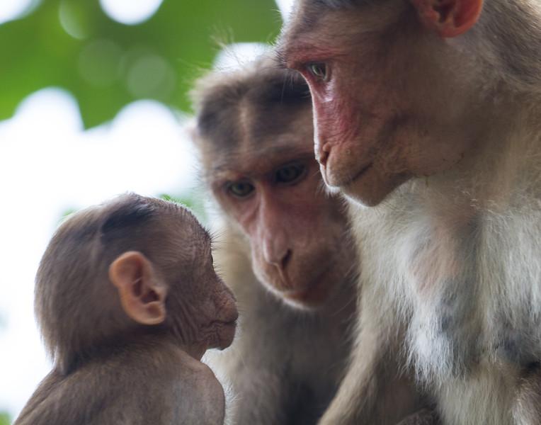 Family Meeting. India.