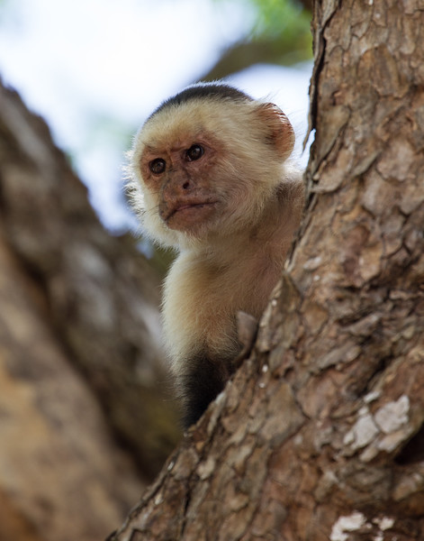 Peeking Out. Costa Rica.