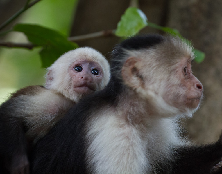Baby and Mama. Costa Rica.
