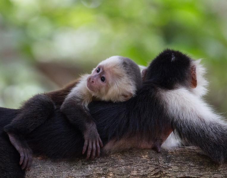Mama Love. Costa Rica.