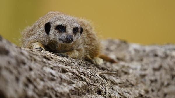 Marwell Zoo - Tue 28/07/2020@12:23
