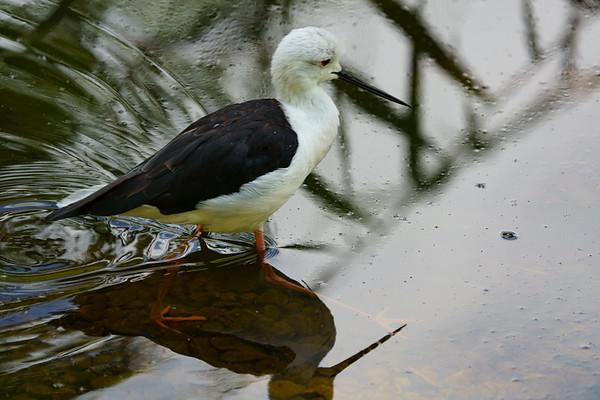 Marwell Zoo - Tue 28/07/2020@13:39