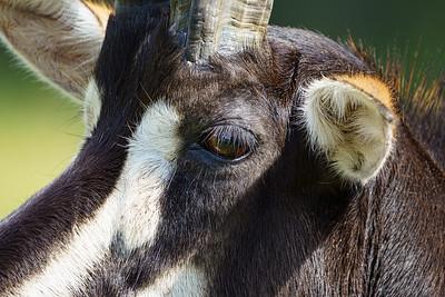 Marwell Zoo - Tue 28/07/2020@13:25