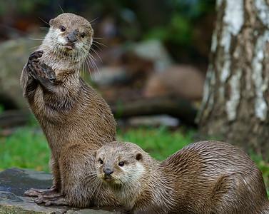 Marwell Zoo - 19/10/2019@13:11